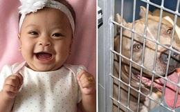 Bé gái 6 tháng tuổi bị chó Pit Bull gắn bó suốt 9 năm của gia đình cắn chết