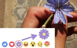 """""""Thả hoa"""" nhiều trên Facebook như thế, nhưng liệu bạn có biết ý nghĩa bông hoa màu tím này không?"""