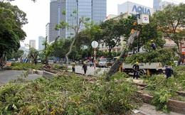 Bắt đầu đốn hạ hàng cây xanh trên đường Lê Lợi