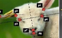 Trí tuệ nhân tạo giúp phát hiện sớm chính xác đến 80% tình trạng bệnh ở động vật