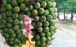 Đổ xô đi xem buồng chuối 'sinh đôi' ở Nghệ An