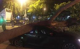 TP.HCM: Đang chạy trong đêm, xe ô tô bị cây xà cừ bật gốc đè bẹp