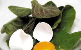 8 món ngon giúp trị bệnh từ trứng gà