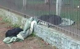 Thấy chú chó ngày nào cũng lôi chăn mới ra ngoài vườn, người chủ cảm động khi biết câu chuyện thật sự