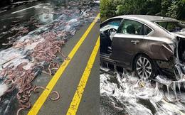 Cuộc đổ bộ của bầy lươn: Hơn 3,4 tấn lươn đổ ra đường tạo nên cảnh tượng kinh hoàng