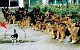 Bạn sẽ kinh ngạc khi biết đến quy trình chặt chẽ để huấn luyện một chú chó cảnh sát