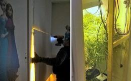 Lật tấm hình công chúa Elsa trong phòng ngủ trẻ em, cảnh sát phát hiện cả khu vườn trồng cần sa