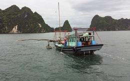 Quảng Ninh: Cấm khai thác thủy sản trong vùng lõi vịnh Hạ Long