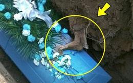 Đưa người cha quá cố đi chôn cất, cả gia đình lạnh gáy khi nhìn thấy thứ này trên quan tài