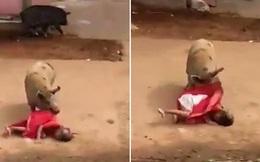Ấn Độ: Cụ bà đáng thương bị lợn tấn công dã man trên đường về nhà