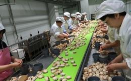 Ngôi làng giàu nhất Nhật Bản tuyển người nhưng chẳng ai muốn làm việc