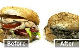 Nếu bạn có thắc mắc quá trình đồ ăn bị mốc như thế nào thì đây là câu trả lời cho bạn!