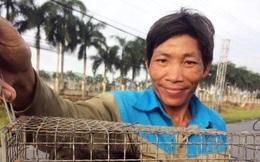 Bẫy chuột đồng mùa nước nổi, thu 150.000 - 200.000 đồng/ngày