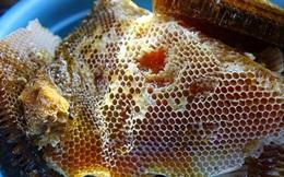Chuyên gia Việt: Thông tin 75% mật ong chứa thuốc trừ sâu là không đúng