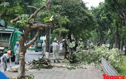Hà Nội: Hàng cây đẹp nhất trên đường Kim Mã bắt đầu bị chặt hạ