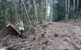 Trụ trì thiền viện phá rừng