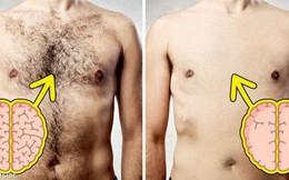 Sự thật bất ngờ: nam giới lông càng nhiều thì càng thông minh