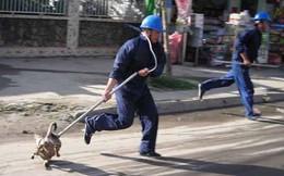 Tỉnh Nghệ An chỉ đạo lập tổ đội bắt chó thả rông, khống chế dịch dại