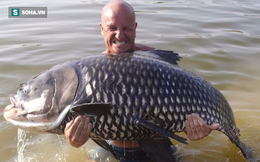 Cá hô ở VN phát cho dân nhân giống: Có phải loài ăn thịt, có nguy hiểm cho người không?