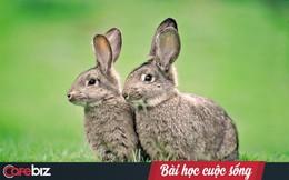 Chuyện thỏ già – thỏ trẻ và bài học đắt giá: Người khác có thể mang cơ hội đến cho bạn nhưng thành công hay không là do bạn