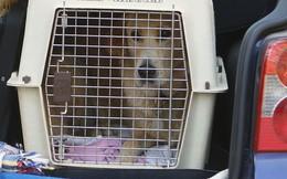 Philippines: Chó chết hàng loạt, chủ đối mặt án tù 90 năm