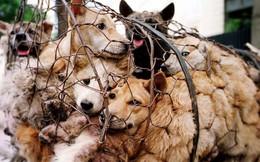 Cộng đồng phẫn nộ trước hình thức câu trộm ngày càng tinh vi ở Trung Quốc: Sử dụng phi tiêu tẩm độc giết chó
