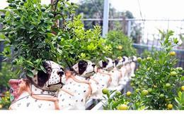 Ảnh: Độc đáo quất bonsai trồng trên lưng những chú chó đốm