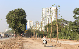 Trồng hàng loạt cây mới cách cây cũ 10m ở đường Phạm Văn Đồng