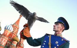 Tại sao Điện Kremlin có biệt đội chim săn mồi?