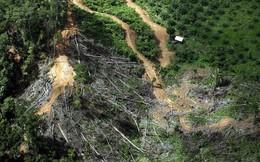 Theo tạp chí của Mỹ: Trái đất giờ đã nguy cấp đến mức trồng cây cũng không còn cứu được chúng ta