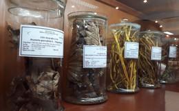Thực hư sâm Ngọc Linh và một số thảo dược của Việt Nam có thể chữa khỏi ung thư?