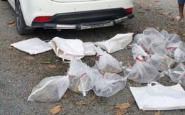 Nhóm người đi ô tô mang 10 túi rắn độc định phóng sinh lên núi ở An Giang