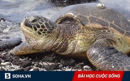 Cứu sống một con rùa biển, 60 năm sau, gia đình nhận được báo đáp nằm ngoài tưởng tượng