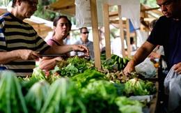 Thực phẩm hữu cơ - thị trường hứa hẹn có thêm nhiều triệu phú