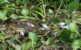 Lấy mẫu nước tìm nguyên nhân cá chết bất thường tại thượng nguồn sông Sài Gòn