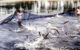 Hải sản Việt có nguy cơ bị cấm xuất khẩu sang EU