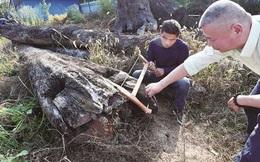 Bắt được khối gỗ trôi sông, sau 5 năm để ngoài vườn mới biết là gia tài 70 tỷ đồng