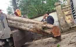 """Cây sưa bán 26 tỷ đồng và câu hỏi về """"giá trị thực"""" của gỗ sưa"""