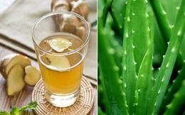 Kết hợp gừng và nha đam: Loại trà rất tốt chống lại nhiều loại bệnh