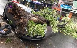 Cây xanh bật gốc, đè ô tô trên đường phố Đà Nẵng