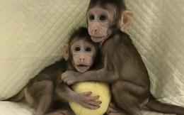 Các nhà khoa học Trung Quốc vừa nhân bản thành công khỉ