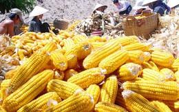 """5 thực phẩm được ví như """"thần hộ mệnh"""" của dạ dày: Chợ Việt vừa nhiều vừa rẻ!"""