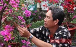 Ngắm vườn hoa giấy '6 trong 1' độc đáo ở miền Tây