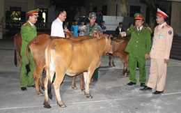 Dắt trộm cả chục con trâu bò rồi thuê xe tải chở đi tiêu thụ