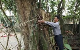 """""""Đại gia"""" bỏ 20,5 tỷ mua gỗ sưa ở Hà Nội: Sau 8 năm, gỗ bán hết còn tiền vẫn bị phong tỏa"""