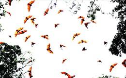 Kỳ lạ: Vào chùa cổ xem hàng ngàn con dơi quạ treo mình lủng lẳng trên cây