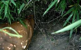 Lãnh 7 tháng tù vì 'cột'… con bò vào gốc cây