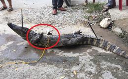 Cột chặt miệng, trói vặn 4 chân cá sấu rồi kích điện: Cảnh tượng đó tôi thấy mà ghê người