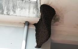 Nhiều người hiếu kỳ với tổ ong mật 'khủng' trong trụ sở huyện