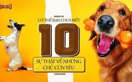 Dù yêu chó đến mấy nhưng có thể bạn cũng chưa biết 10 sự thật bất ngờ về những chú cún đáng yêu
